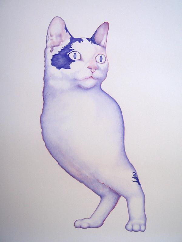 cat two legs